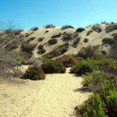 Sexual freedom naked FKK in the Maspalomas dunes. Anything goes